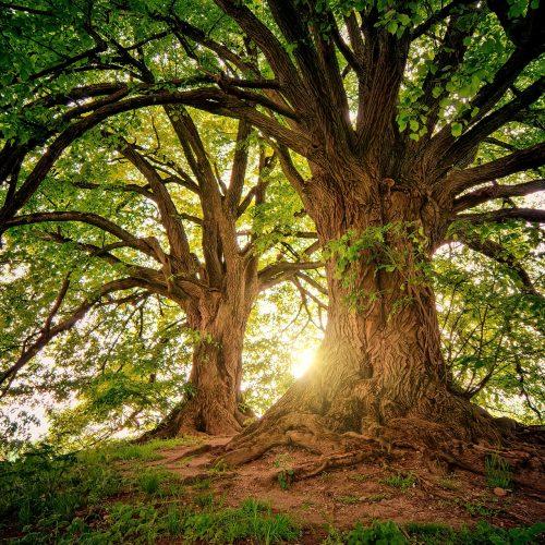 coaching albero radici