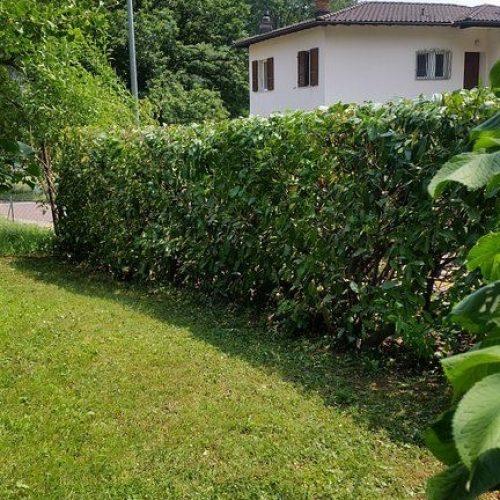 sempreverde_giardini-8